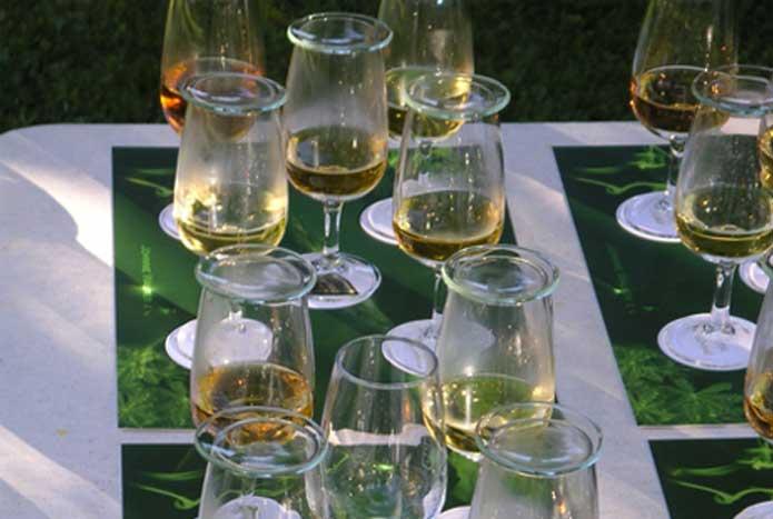 Dégustation vin, champagne